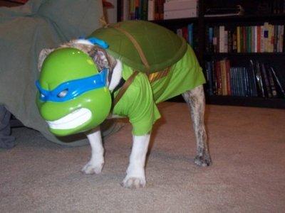 Tortue Nin-chien